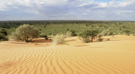 Reiseziel Kalahari Wüste (Namibia) Südafrika