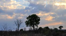 Reiseziel Hwange Simbabwe