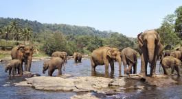 Reiseziel Nagarhole Südindien