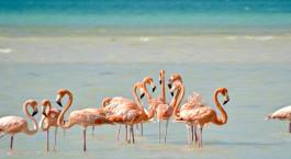 Reiseziel Isla Holbox Mexiko