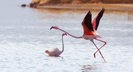 Destination Lake Bogoria Kenya