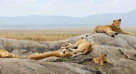 Destination Serengeti (Western) Tanzania