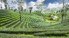 Reiseziel Pussellawa Sri Lanka