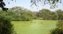 Reiseziel Bharatpur Nordindien