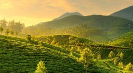 Destination Munnar South India