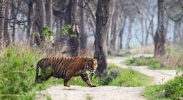 Reiseziel Ranthambore Nordindien