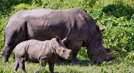 Destination Ziwa Rhino Sanctuary Uganda