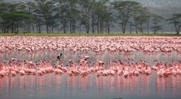 Destination Lake Nakuru Kenya