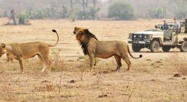 Destination Kafue Zambia