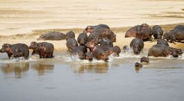Destination North Luangwa Zambia