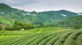 Darjeeling Este de India