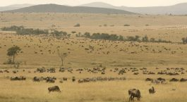 Reiseziel Lamu Kenia