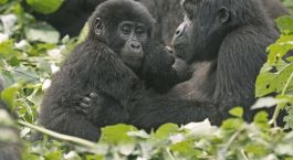 Reiseziel Cyangugu Ruanda