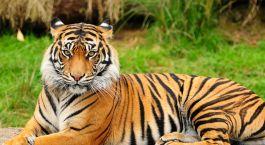 Reiseziel Jamnagar Zentral- & Westindien
