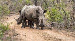 Reiseziel Mkhaya Game Reserve Swaziland