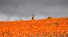 Reiseziel Namaqualand Südafrika