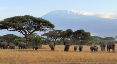 Example private tour: Classic Northern Tanzania
