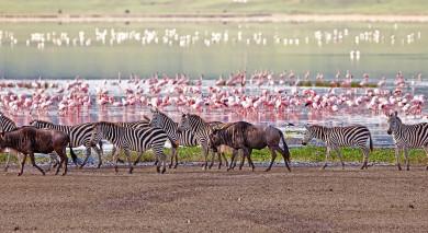 Empfohlene Individualreise, Rundreise: Safari & romantisches Sansibar
