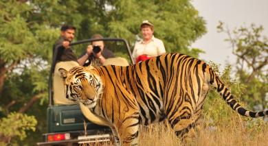 Empfohlene Individualreise, Rundreise: Safarireise in Zentralindien