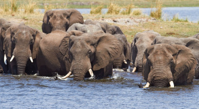 Example private tour: Victoria Falls and Botswana Highlights