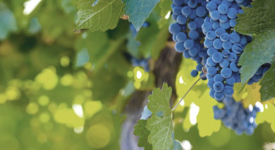 Example private tour: Argentina and Chile: Food and Wine Experience