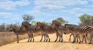 Empfohlene Individualreise, Rundreise: Von Kapstadt zu den Viktoriafällen mit Rovos Rail