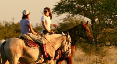 Empfohlene Individualreise, Rundreise: Südamerikas Tierwelt – Individuelle Rundreise für Naturliebhaber