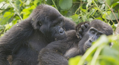 Example private tour: Grand Tour of Uganda
