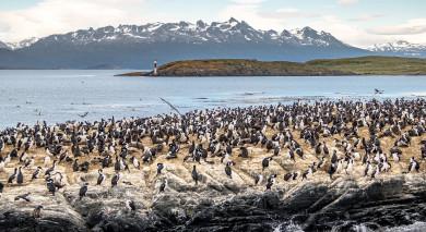 Empfohlene Individualreise, Rundreise: Abenteuer im Südlichen Ozean – Falkland Inseln & Antarktis