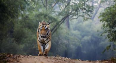 Empfohlene Individualreise, Rundreise: Indien: Höhepunkte des Nordens