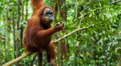 Example private tour: Classic Sumatra and Java