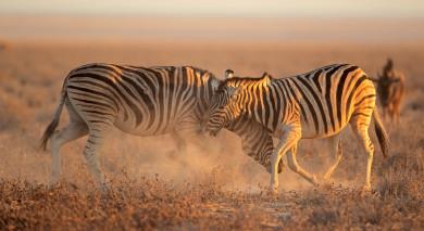 Empfohlene Individualreise, Rundreise: Namibia Roadtrip – Die Höhepunkte des Nordens
