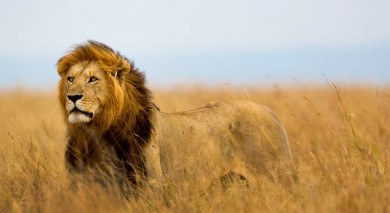 Example private tour: Highlights Africa: Masai Mara, Gorillas and Cape Town