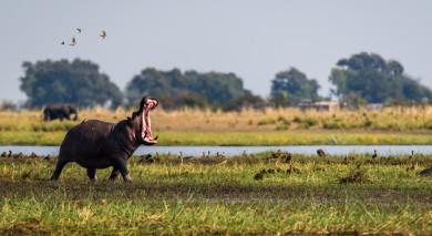 Empfohlene Individualreise, Rundreise: Highlights des südlichen Afrika – vom Okavango Delta bis zu den Victoriafällen