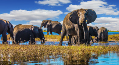 Example private tour: Botswana: Wildlife and Victoria Waterfalls