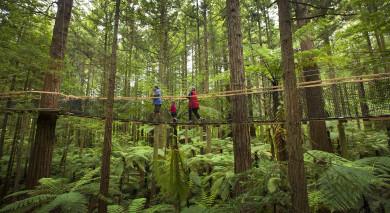 Empfohlene Individualreise, Rundreise: Neuseeland – Entdeckungsreise auf der Nordinsel