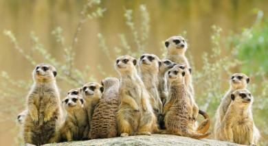 Empfohlene Individualreise, Rundreise: Roadtrip: Victoriafälle & Botswana Safari-Highlights