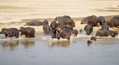 Empfohlene Individualreise, Rundreise: Auf Safari durch Sambia – weite Landschaften & wilde Tierwelt