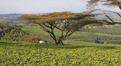 Empfohlene Individualreise, Rundreise: Safari Rundreise – Höhepunkte von Malawi