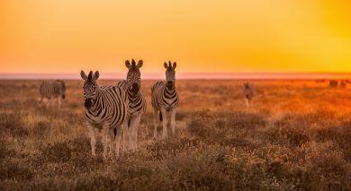 Example private tour: Namibian Highlights, Safari and Waterfalls