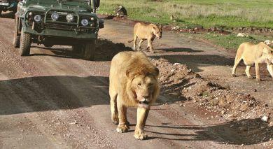 """Empfohlene Individualreise, Rundreise: Rundreise Östliches Südafrika: Höhepunkte der """"Rainbow Nation"""""""
