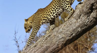 Example private tour: South Africa – Kruger to Cape Town
