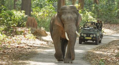 Example private tour: Wild and Urban Jungle Jaunts
