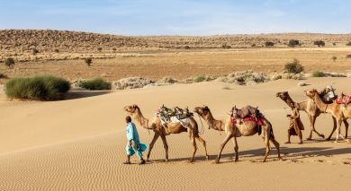 Example private tour: Wild and Historic Rajasthan