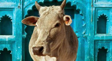 Empfohlene Individualreise, Rundreise: Bezaubernde Nordindien Reise – klassisch & komfortabel
