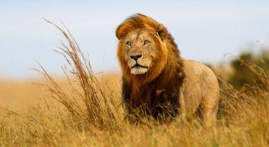 Empfohlene Individualreise, Rundreise: Die Höhepunkte von Kenia und Tansania