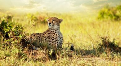 Empfohlene Individualreise, Rundreise: Tansania: Wahre Wildnis, unberührtes Juwel & Inselparadies