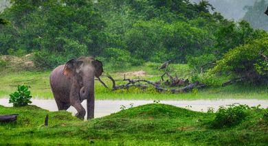Empfohlene Individualreise, Rundreise: Sri Lanka – Regenwald, Tierwelt und historische Tempel