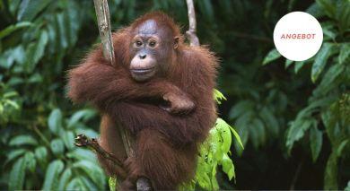 Empfohlene Individualreise, Rundreise: Natur und Kultur in Indonesien