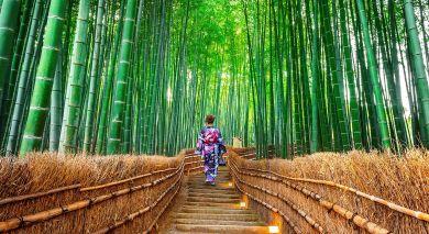 Empfohlene Individualreise, Rundreise: Japans Höhepunkte hautnah erleben